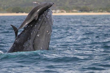 baleia.jpg