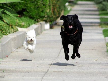 cachorros.jpg