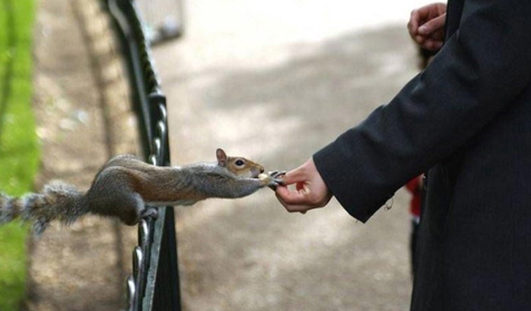 esquilo.jpg